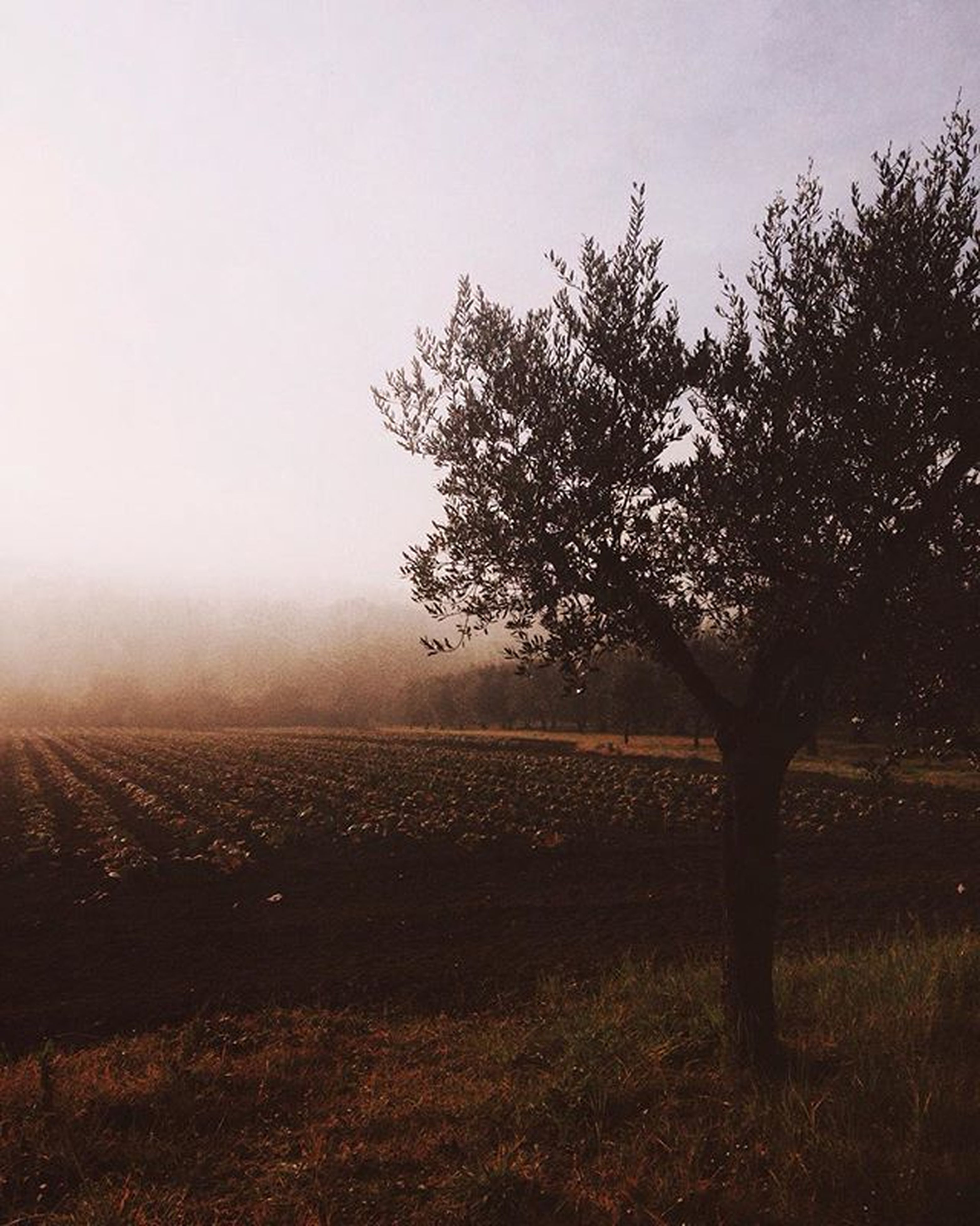 landscape, tranquility, tranquil scene, field, tree, fence, scenics, nature, fog, sky, beauty in nature, rural scene, growth, grass, foggy, bare tree, non-urban scene, copy space, no people