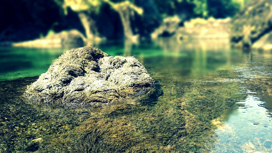 Traunfälle, Upper-Austria Austria EyeEm Nature Lover Traunfall Beauty In Nature Clear Water Close-up Day Moss Nature No People Outdoors Rock - Object Tranquility Water