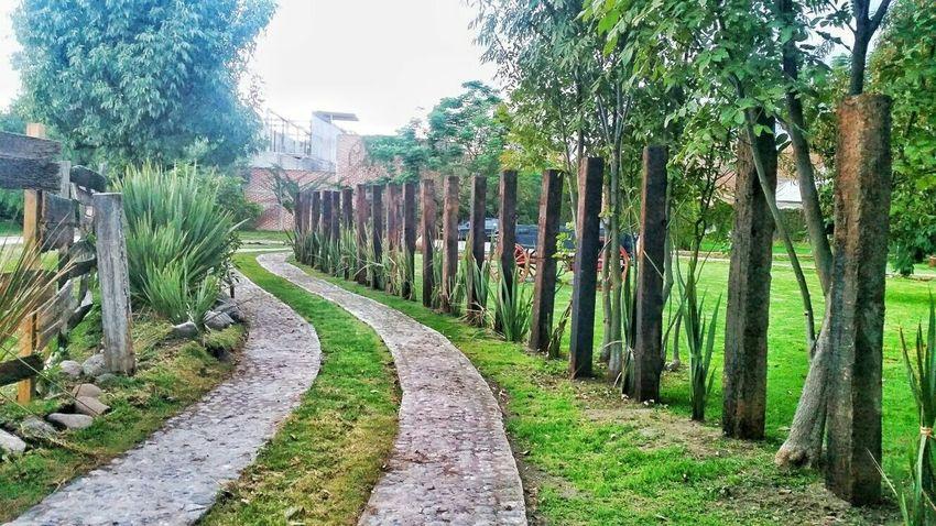 Exhaciendacruzdecantera Verde Caminos Natural Photogoss