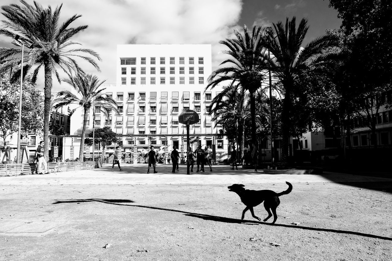 Balancing Act Barcelona Black And Grey Black And White City Dog Dogtrick Impression Outdoors Palm Tree Shadow Shadowplay Sunshine Tree Walk In The Park