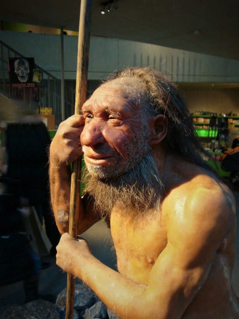 Neandertal Museum Adult Adults Only Ancient Civilization Close-up Day Early European People Happiness Holding Indoors  Neandertaler Old Man Of Storr One Man Only One Person People Smiling