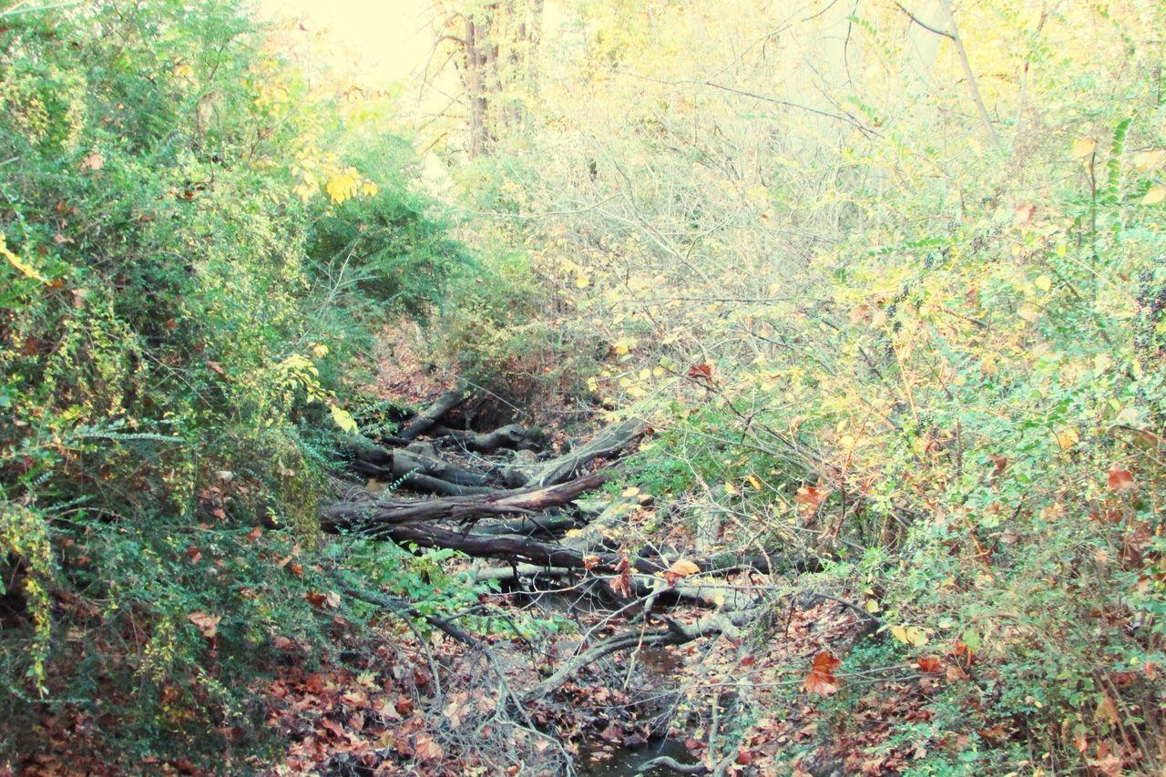 Creek Creekbed Fallen Tree Creekside Beautiful Nature Autumn Autumn Colors Trees