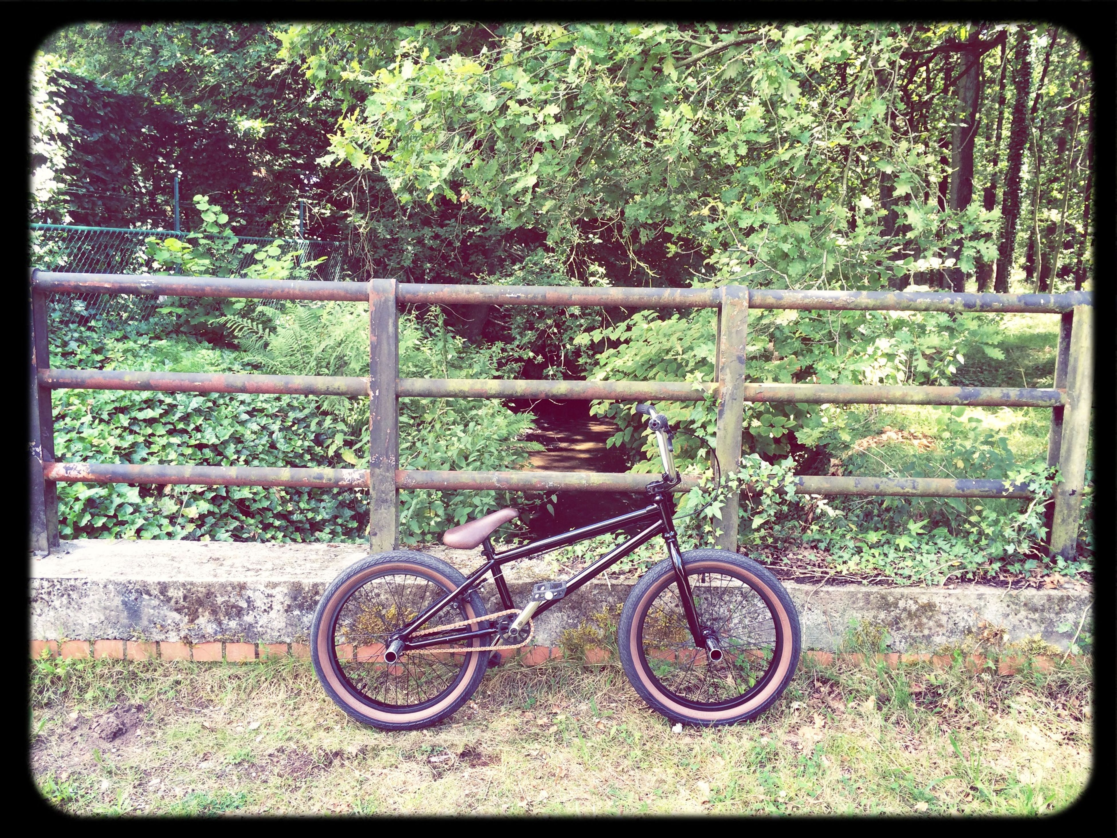 bicycle, tree, transfer print, growth, transportation, auto post production filter, plant, wheel, railing, mode of transport, green color, nature, park - man made space, day, outdoors, land vehicle, metal, sunlight, no people, grass