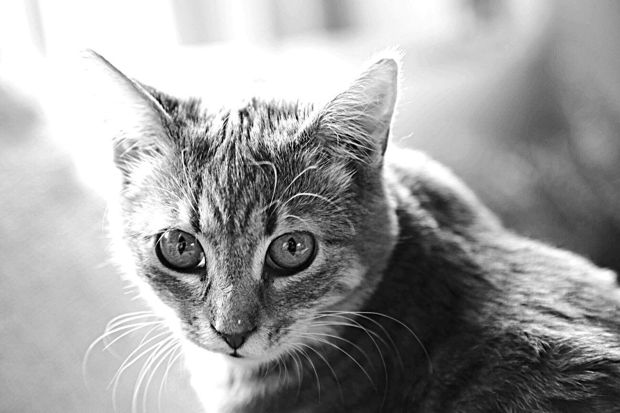 Beautiful stock photos of baby katzen, Animal Themes, Cat, Day, Domestic Animals