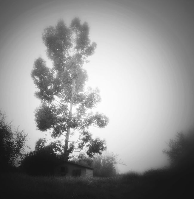 EyeEm Best Shots - Black + White Blackandwhite Blackandwhitephotography Black And White Black & White Tree Garden