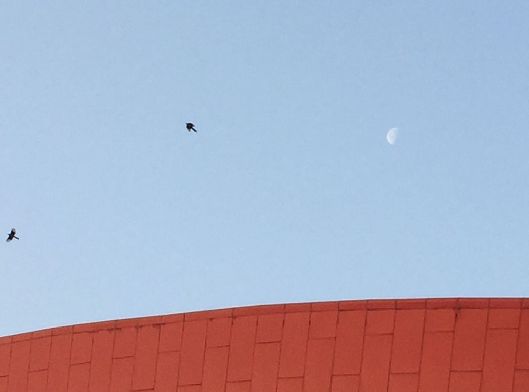 Copy Space Low Angle View Clear Sky Flying Building Exterior Bird Animal Themes Built Structure Animals In The Wild Architecture No People Outdoors One Animal Moon Day Nature IPhone IPhoneography