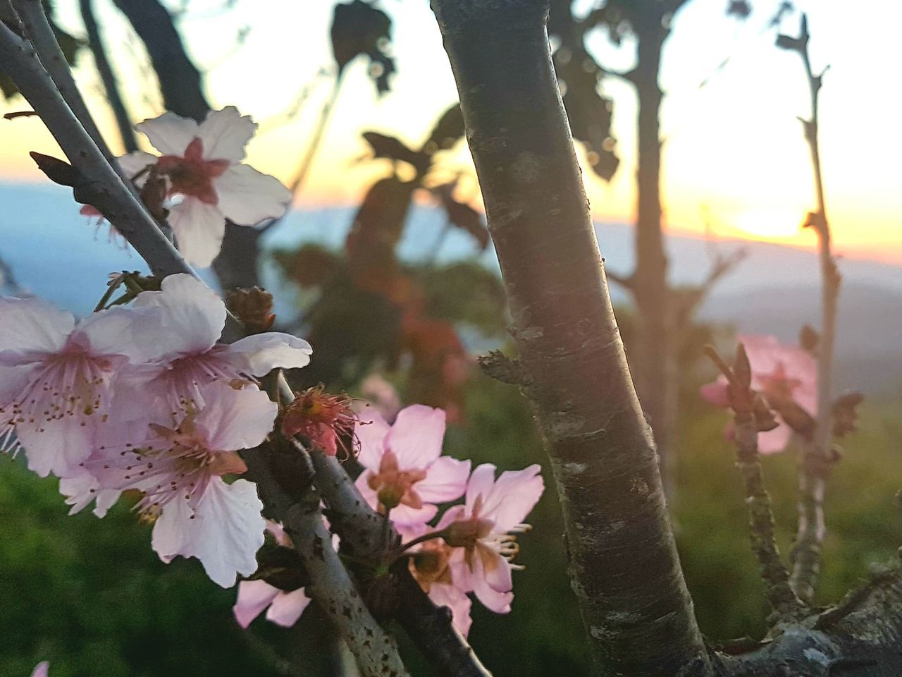 flower, growth, nature, beauty in nature, blossom, tree, fragility, springtime, freshness, branch, no people, petal, outdoors, day, close-up, blooming, flower head