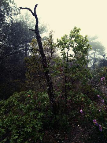 Flores Flower Montana Forest Bosque Lluvia Arboles Rain Tree