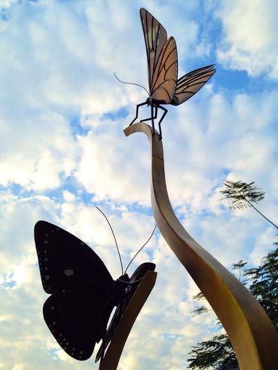 沒蝶 Buterfly Blue Sky