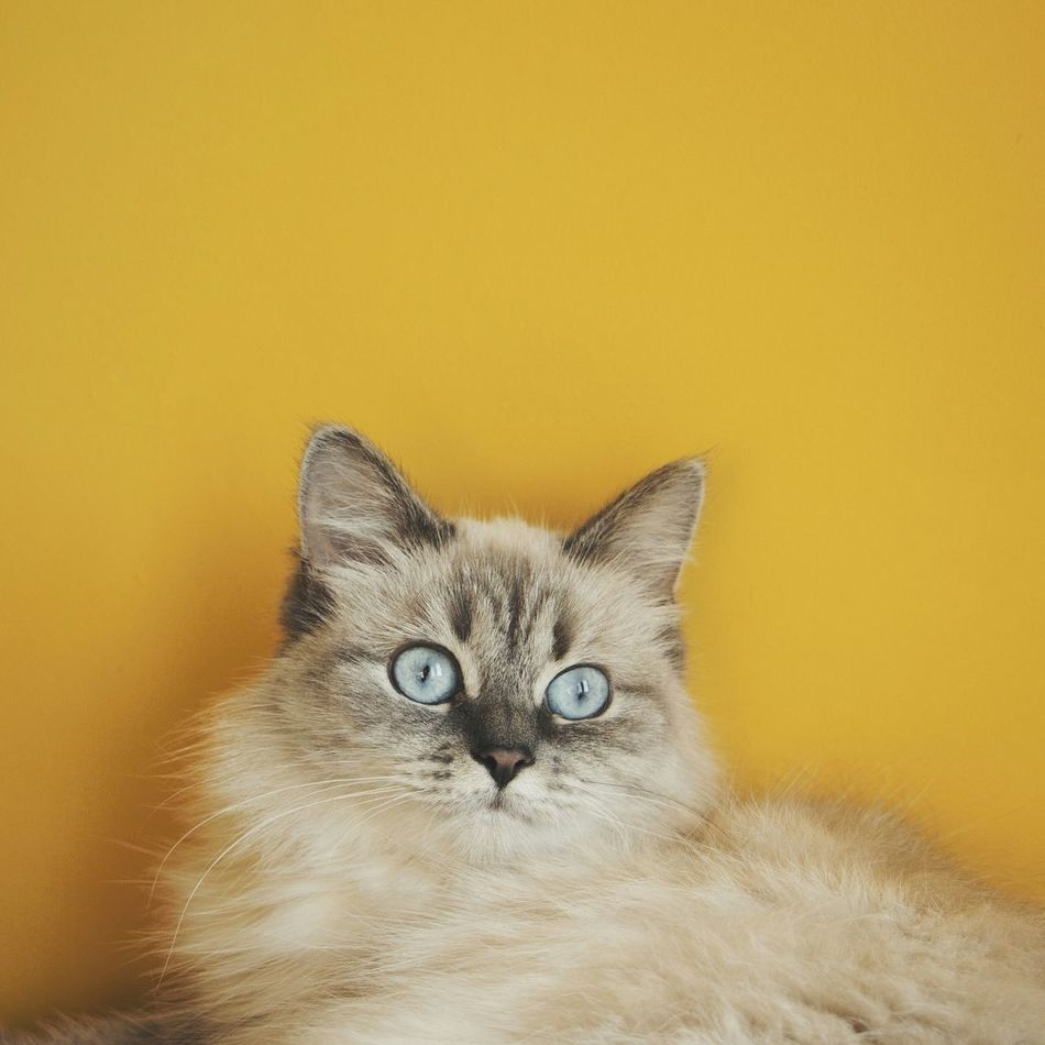 Beautiful stock photos of blau, Alertness, Animal Eye, Animal Head, Animal Themes