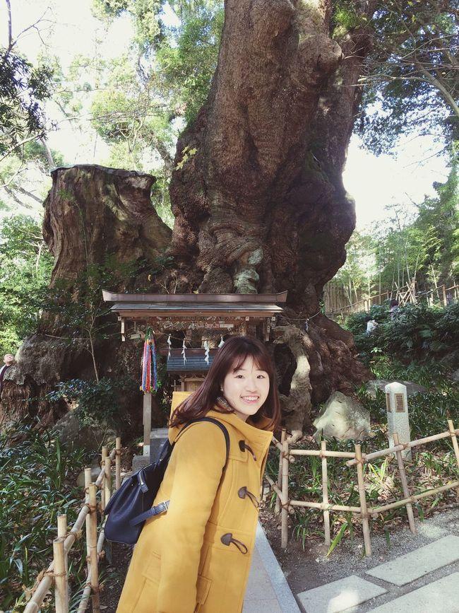 来宮神社御神木-願いを込めながら楠を一周すると願い事が叶う伝説 Power In Nature Powerspot Bigtree Japanese Shrine Atami In Japan