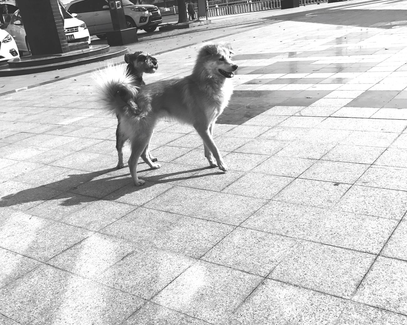 Dog Animal Themes