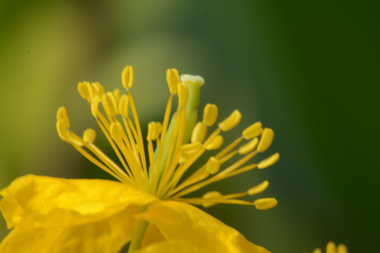 yellow, flower, nature, growth, fragility, plant, petal, beauty in nature, freshness, no people, flower head, close-up, blooming, outdoors, day