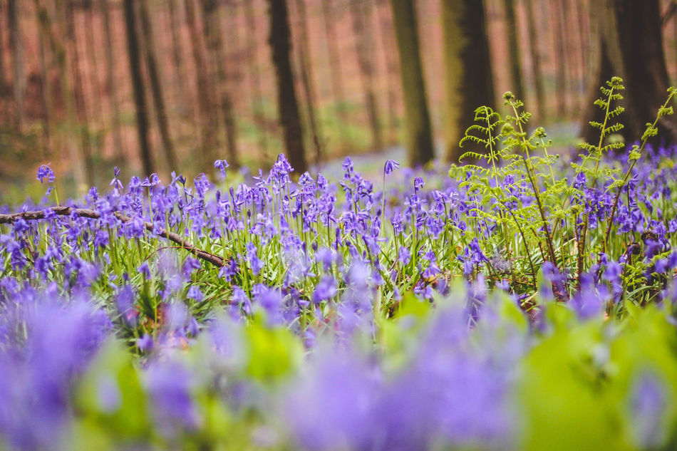 Beauty In Nature Flower Forest Nature Nature Nature_collection No People Outdoors Purple Purple Flower Purple Flowers Selective Focus Tranquility Tree Woods