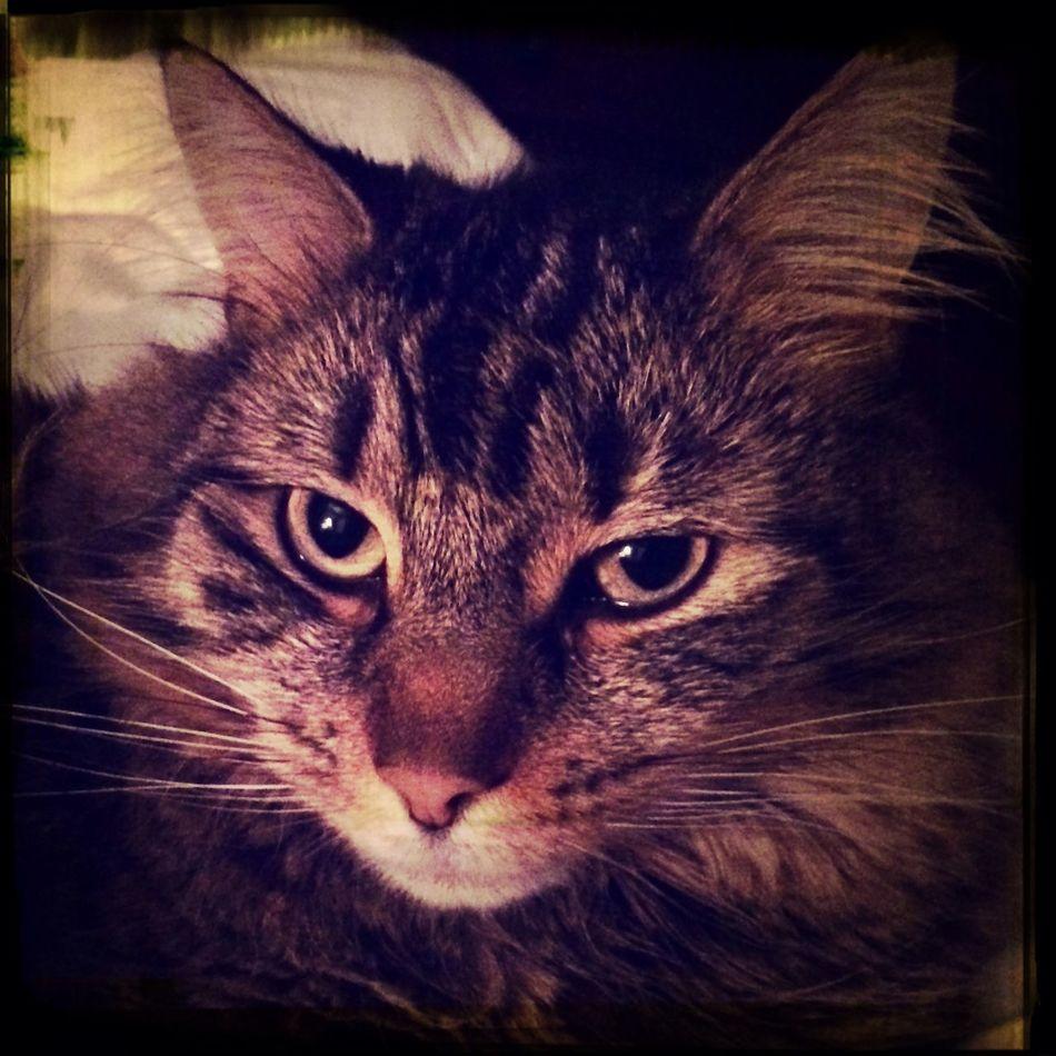 Mr Kitty Relaxing