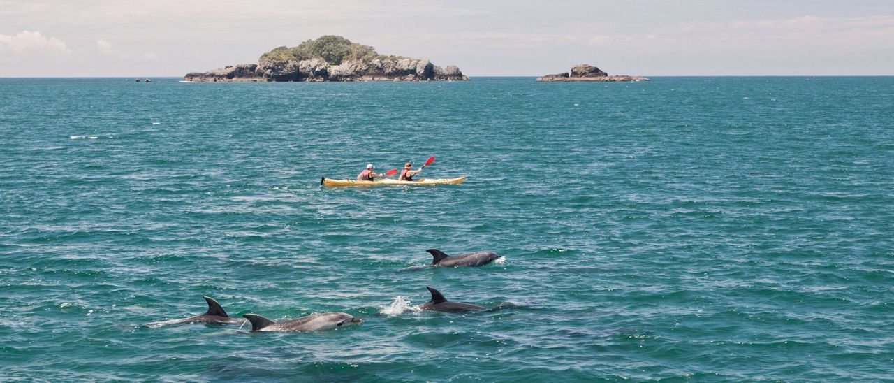 Dolphins, New Zealand Sea Dolphins Nature