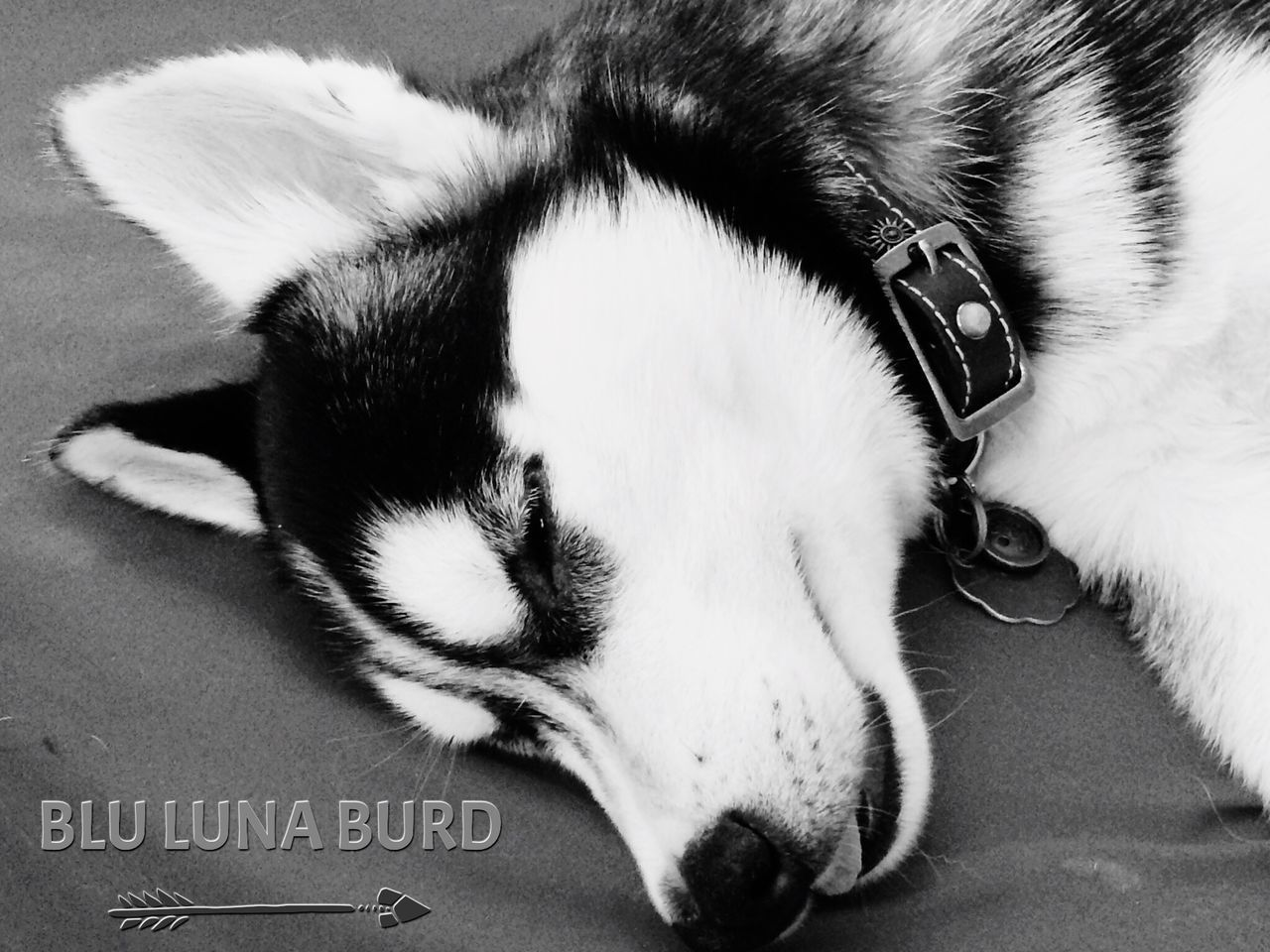 pets, dog, domestic animals, animal themes, one animal, sleeping, indoors, relaxation, mammal, high angle view, close-up, no people, day