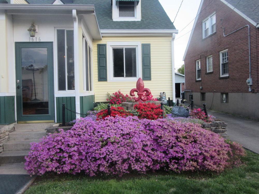 Azalea Climatis Colorful Colors Flower Flower Bed Flower Garden Flowers Fluer De Lis Garden Garden Flowers Hostas Landscape Outside