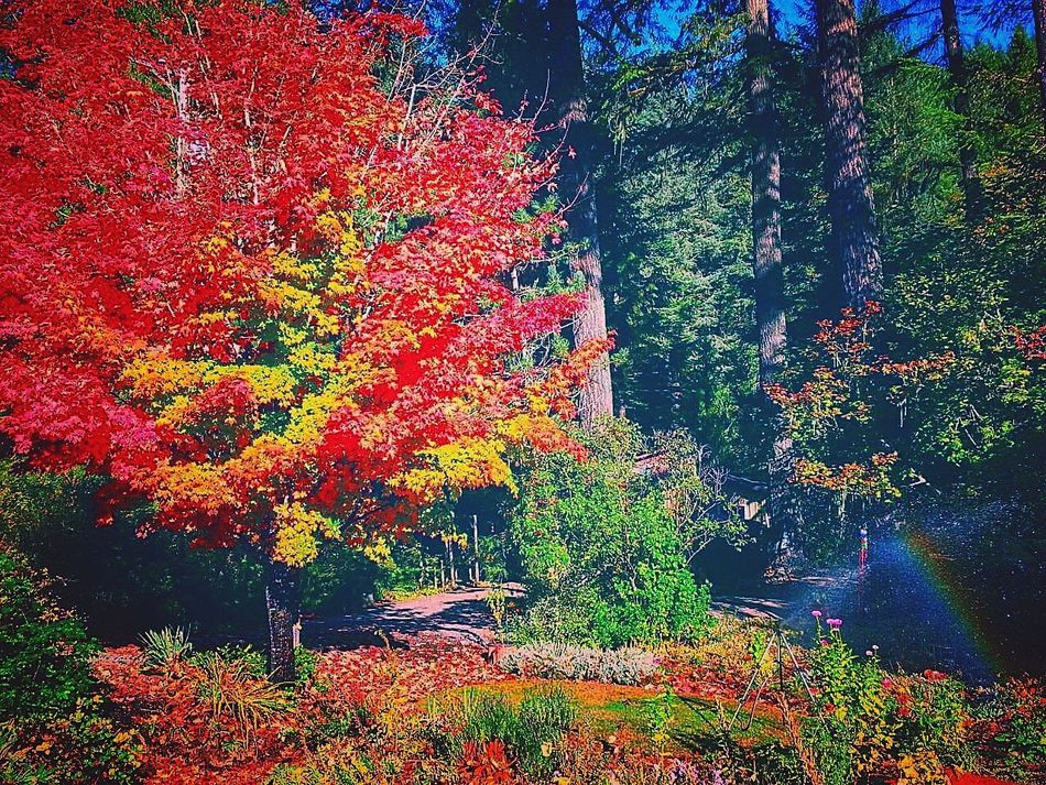 Multi Colored Tree Backgrounds Red No People Nature Day Happiness Roses, Flowers, Nature, Garden, Bouquet, Love, Oregon Beauty Tranquility Romance Of Nature Outdoors Passion Escape Adventure Beauty In Nature Tree Summertime Landscape_photography Lakeside Lake Life Scenic Drive Oregon Colorful