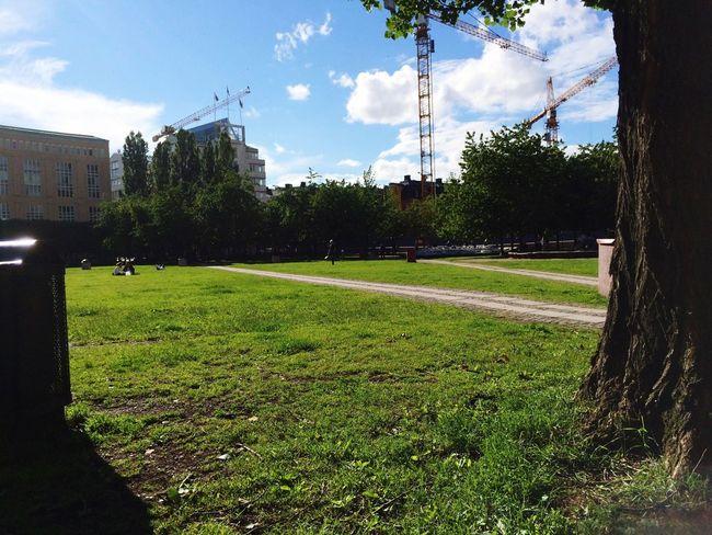 Soaking Up The Sun Sunny Sunny☀ Hugging A Tree Enjoying The Sun Stockholm Sweden