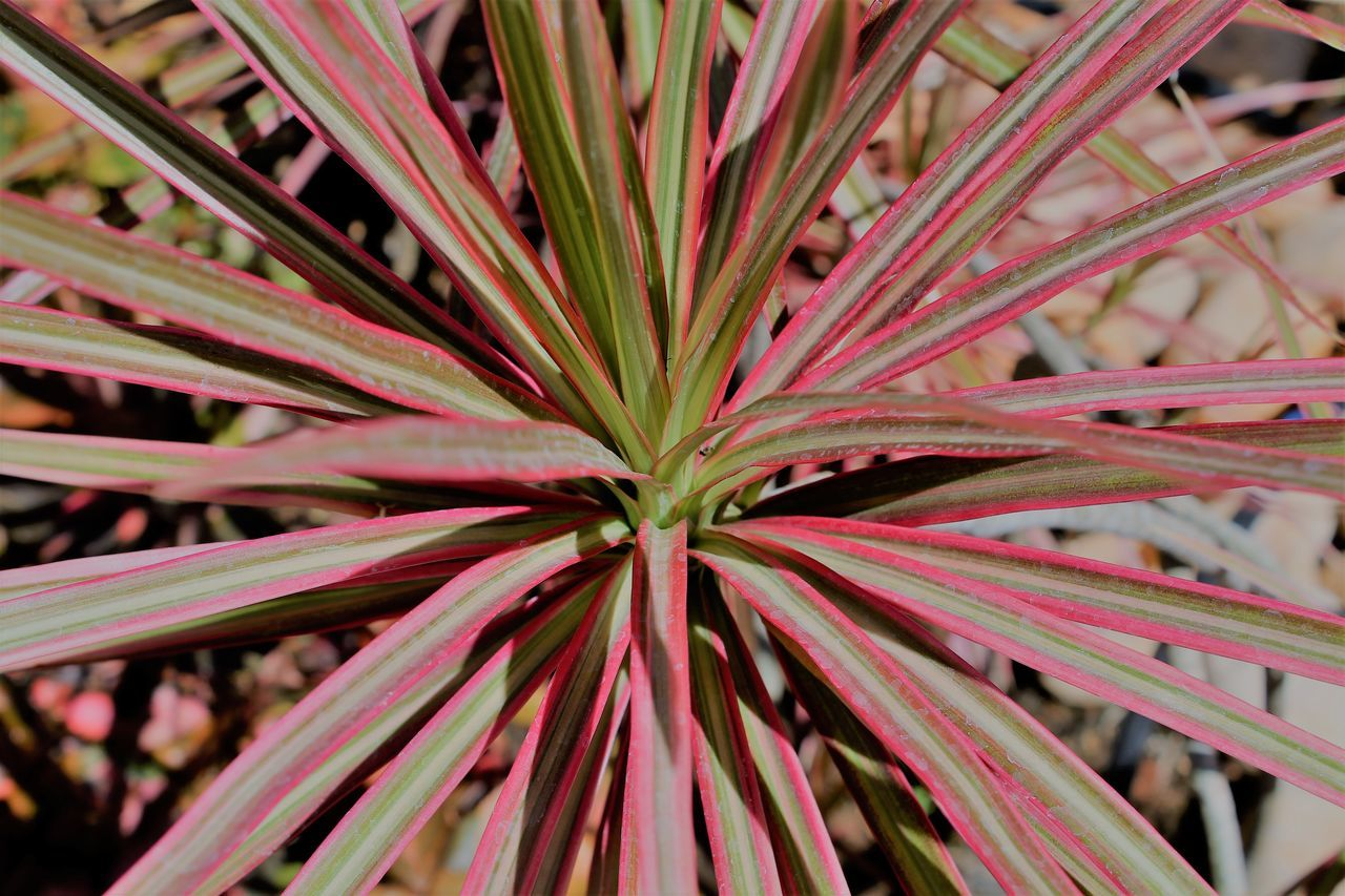 Patterns in Plants Beauty In Nature Close-up Colors Freshness Full Frame Growth Nature No People Patterns In Nature Plants