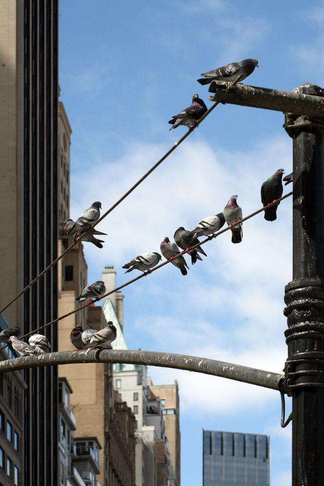 Birds Birds Of EyeEm  Birds_collection Fresh On Eyeem  Friends Fringe Just Hanging Out New York New York Street Photography Pidgeons Street Photography Streetphotography Hanging Out Community