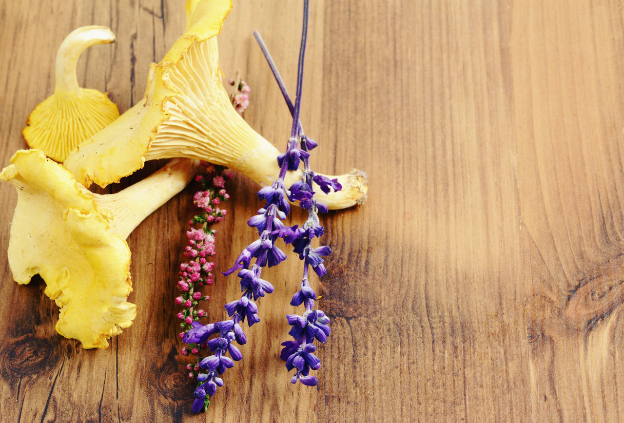 Golden Chanterelle mushrooms on wooden table background. spice like sage aside. Blue Chanterelle Mushrooms Chanterelles Close-up Day Decoration Flower Focus On Foreground Fragility Freshness Golden Chanterelle Growth Healthy Eating Mushroom Mushrooms Nature No People Petal Plant Sagebrush Wood - Material Wooden Yellow