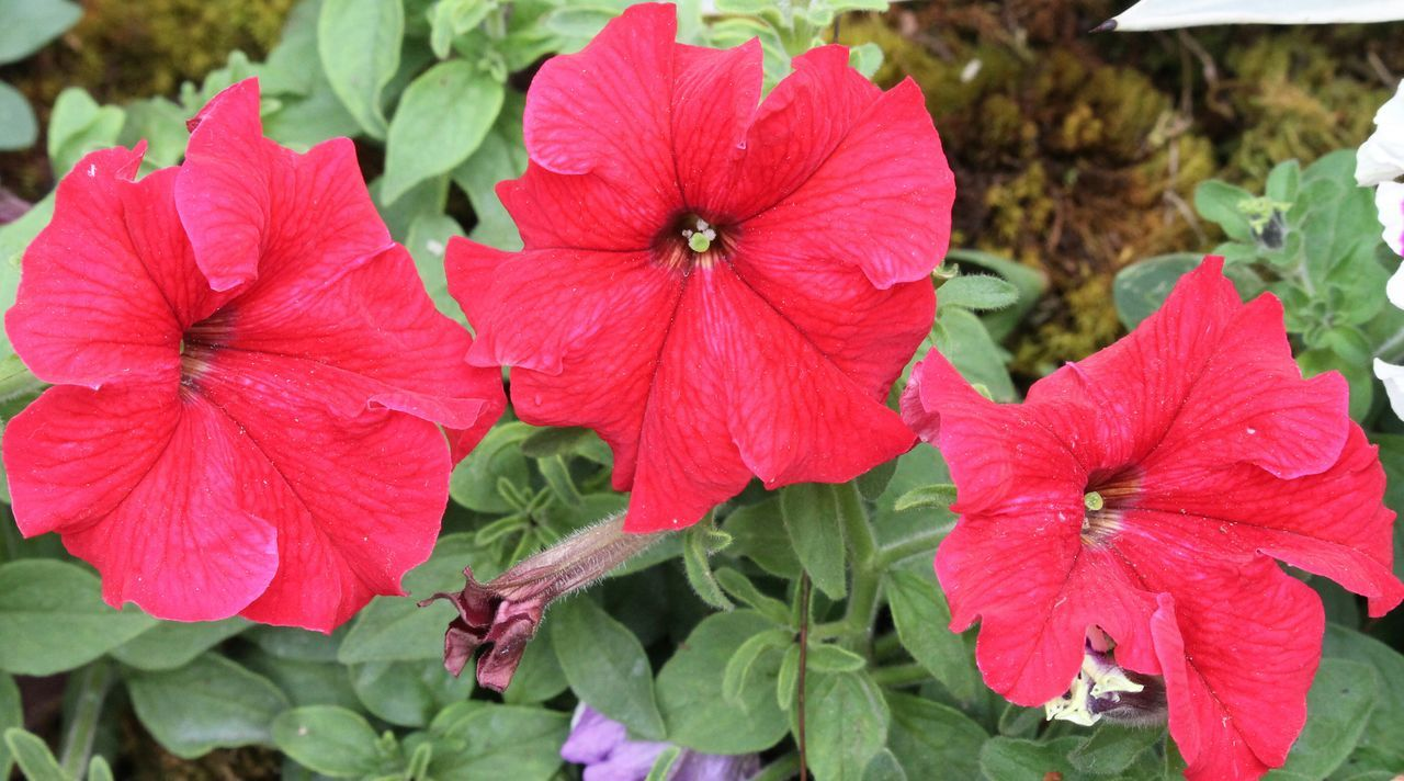 Flower Plant Nature Red Flower Head Beauty In Nature Nofilter Photography