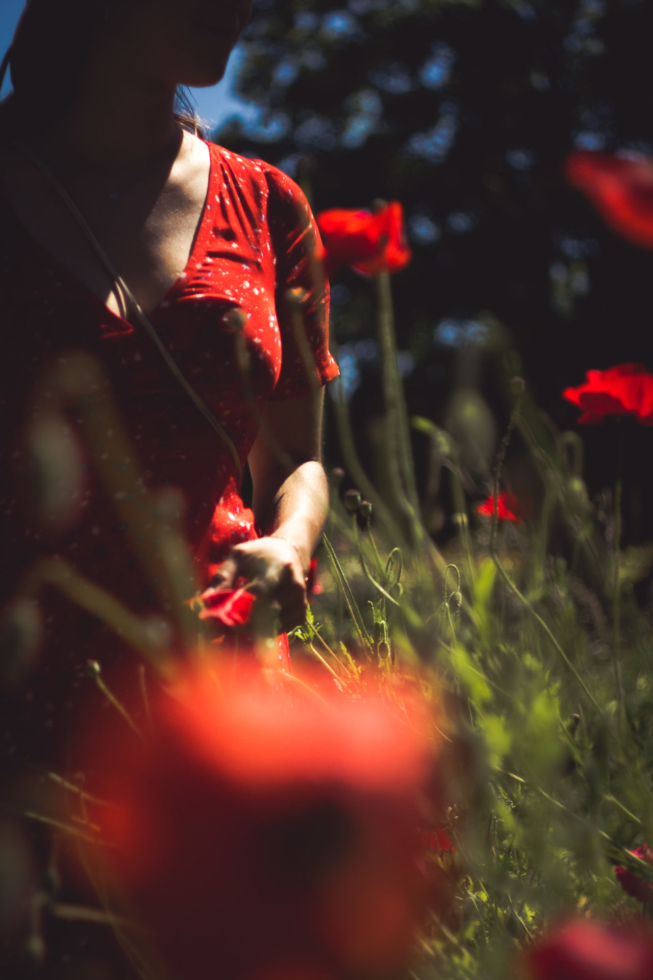 Close-up Day Growth Nature One Person Outdoors People Poppy Flowers Real People Red