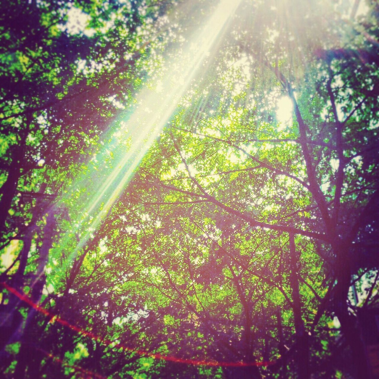 sunbeam, tree, nature, growth, sunlight, lens flare, sun, bright, beauty in nature, day, low angle view, no people, outdoors, leaf, brightly lit, scenics, forest, branch, freshness