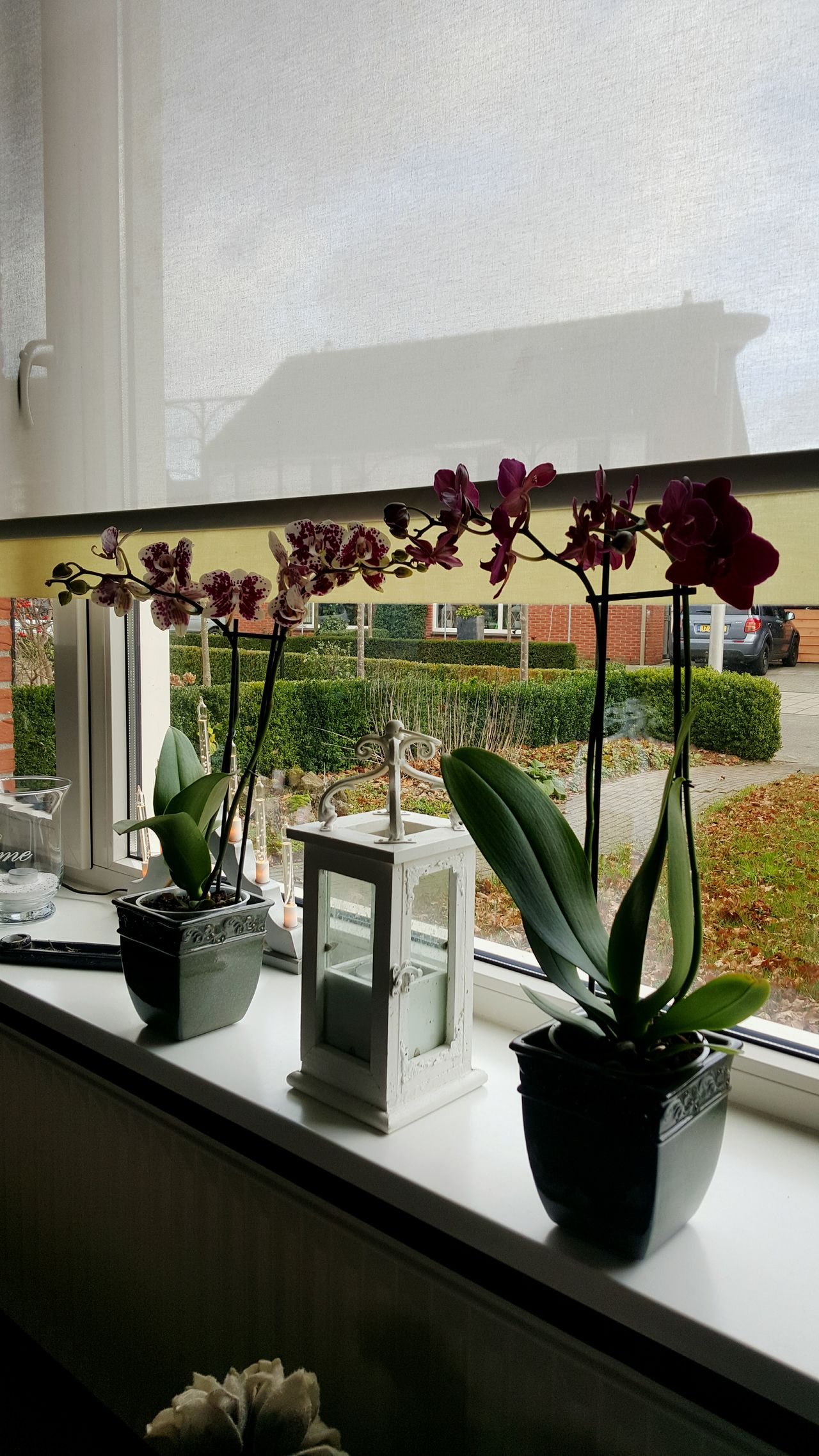 Beautiful stock photos of orchid,  Beauty In Nature,  Day,  Enschede,  Flower