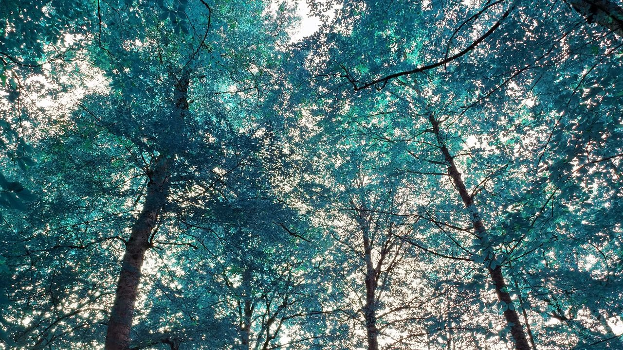 tree, low angle view, nature, branch, beauty in nature, tree trunk, growth, no people, day, sunlight, outdoors, tranquility, scenics, sky