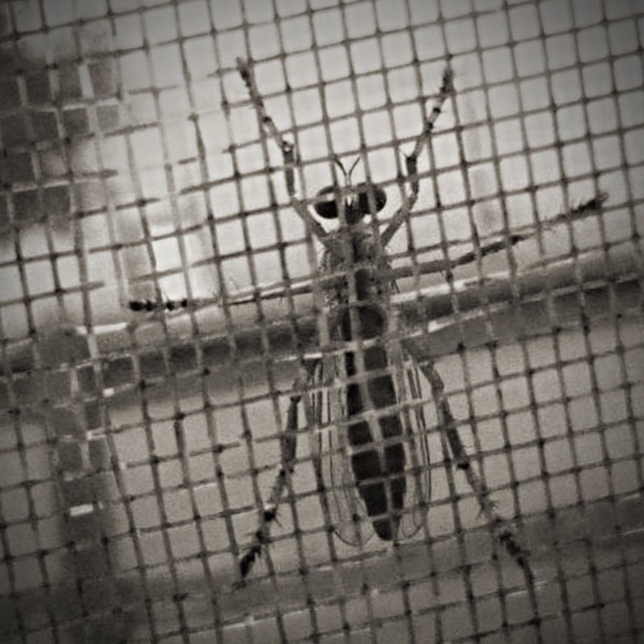 one animal, animal themes, insect, animals in the wild, wildlife, animal wildlife, close-up, spider, no people, indoors, day