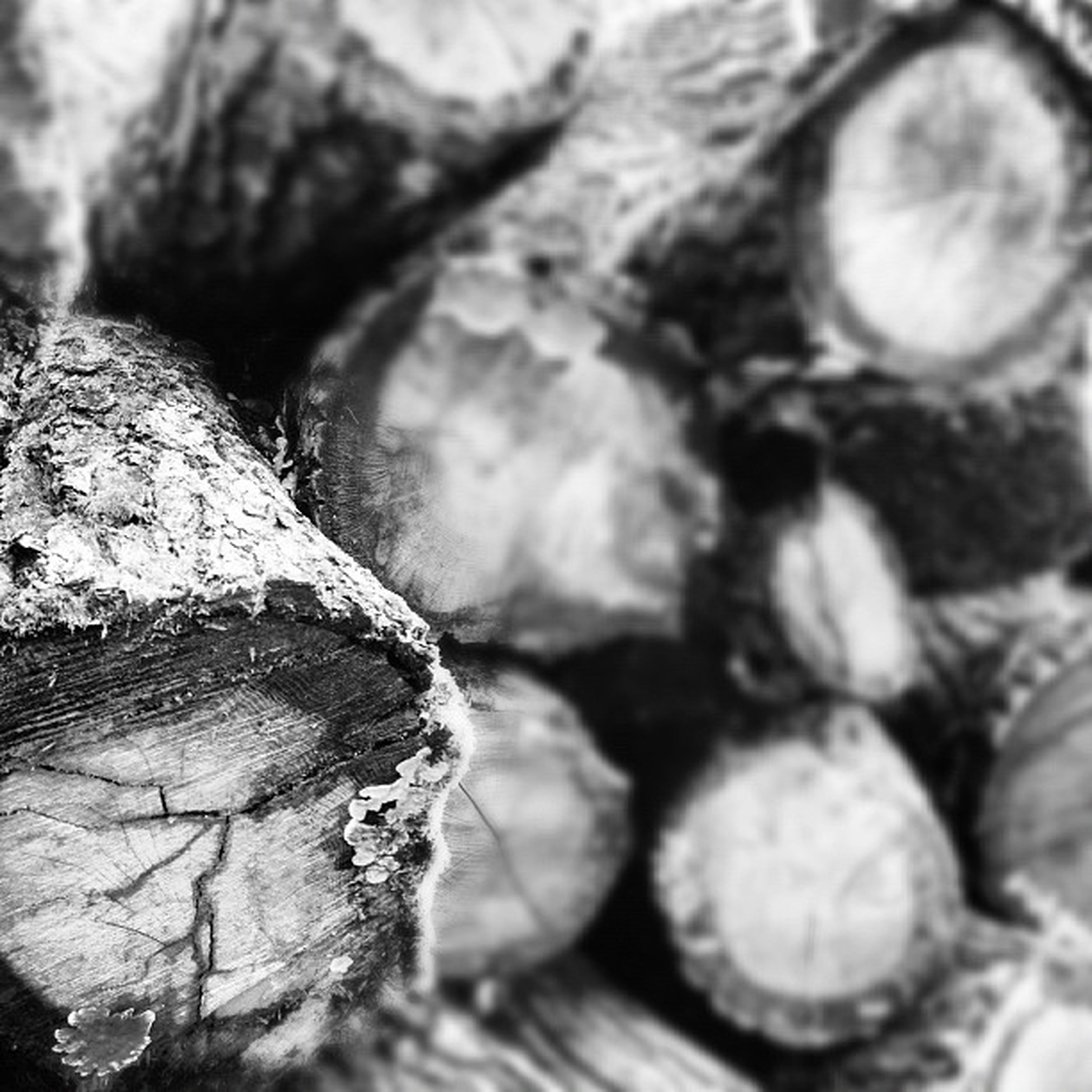 close-up, textured, full frame, backgrounds, pattern, detail, selective focus, rough, no people, wood - material, outdoors, natural pattern, day, tree, stack, focus on foreground, part of, nature, tree trunk, deforestation