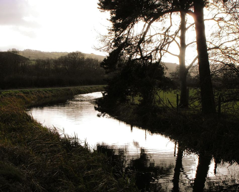 Trees Nature Haze Newtown Powys Landscape Contrasts Countryside Canal Water Evening Glow Walking Wales Outdoors No People Evening Light Pine Trees Waterway Britain British
