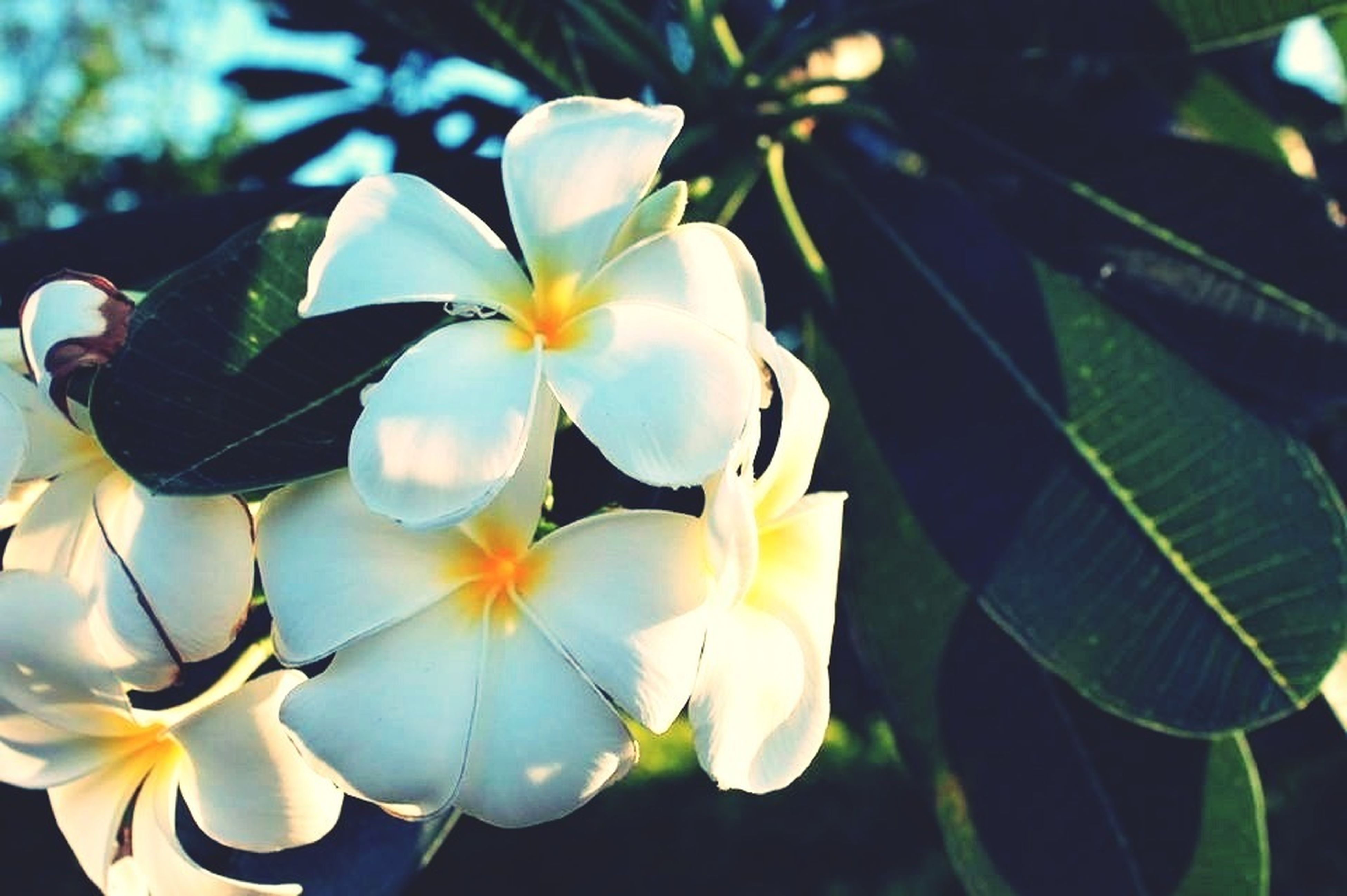 flower, petal, freshness, fragility, growth, flower head, beauty in nature, leaf, blooming, nature, close-up, plant, white color, in bloom, focus on foreground, blossom, park - man made space, outdoors, day, pollen
