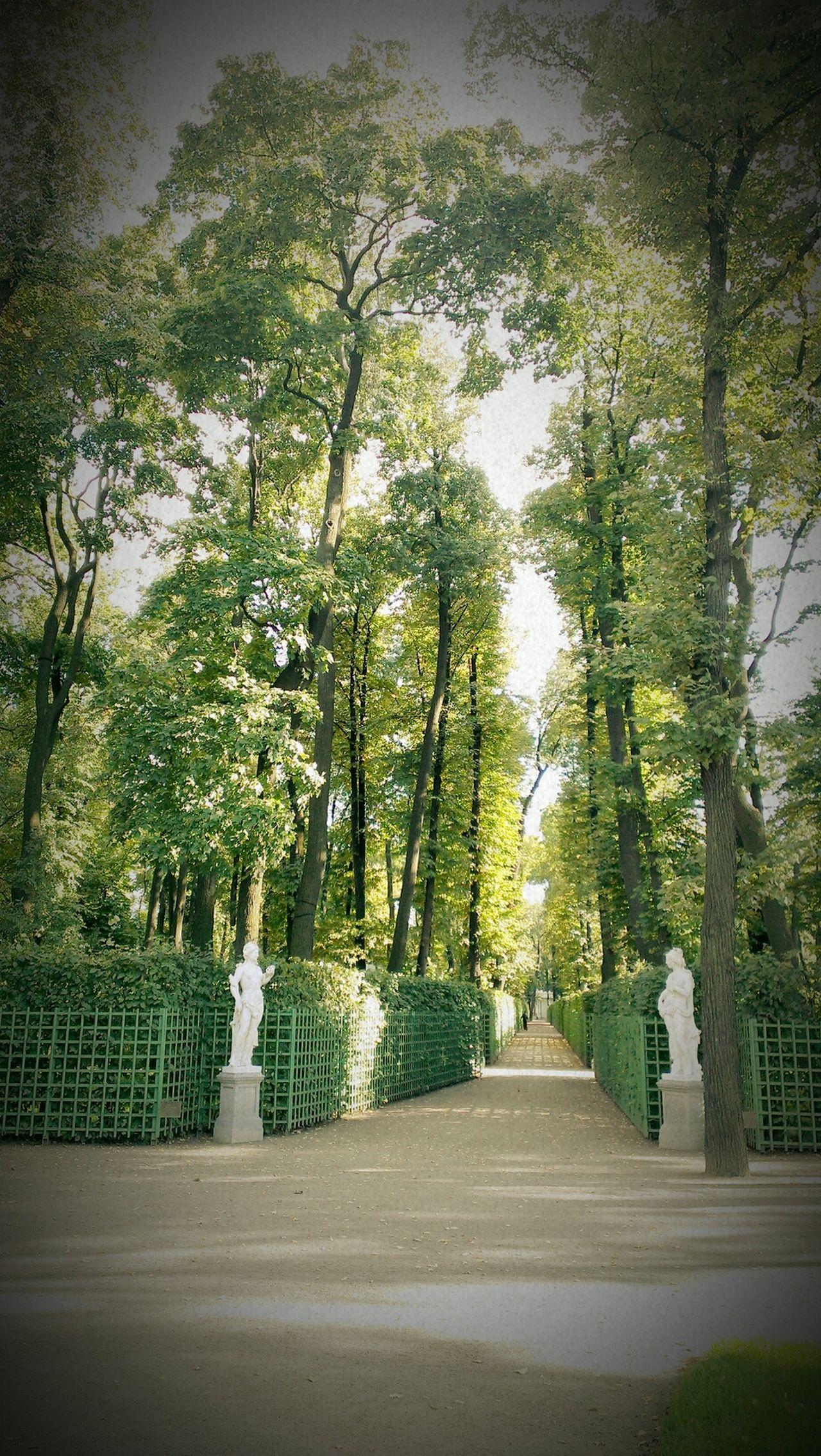 Summer Trees Park Beauty
