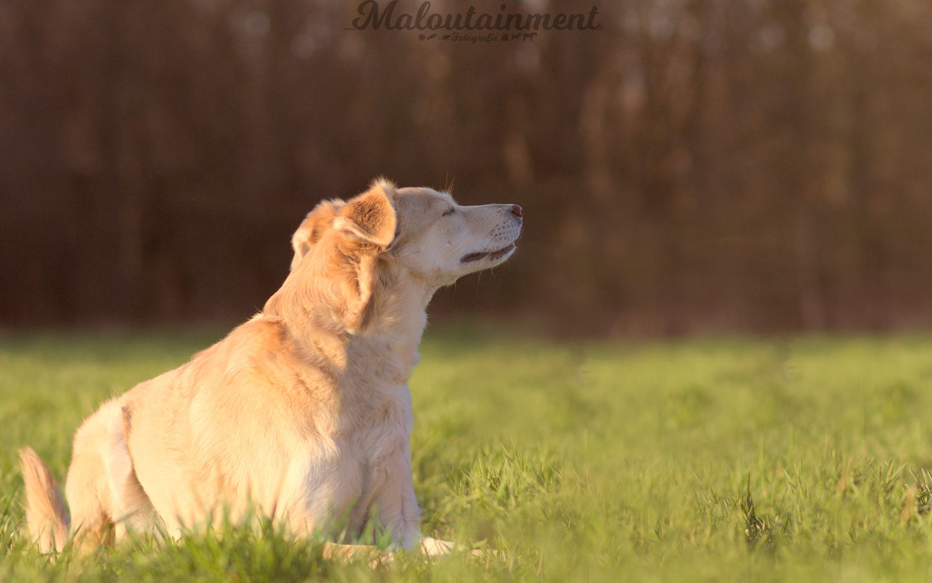 One Animal Grass Animal Day Outdoors No People Nature Beauty In Nature Hundefotografie Dog Photography Mischling Mix Mixed Dog Summer Sommer Sniffing Schnüffelnder Hund Portrait
