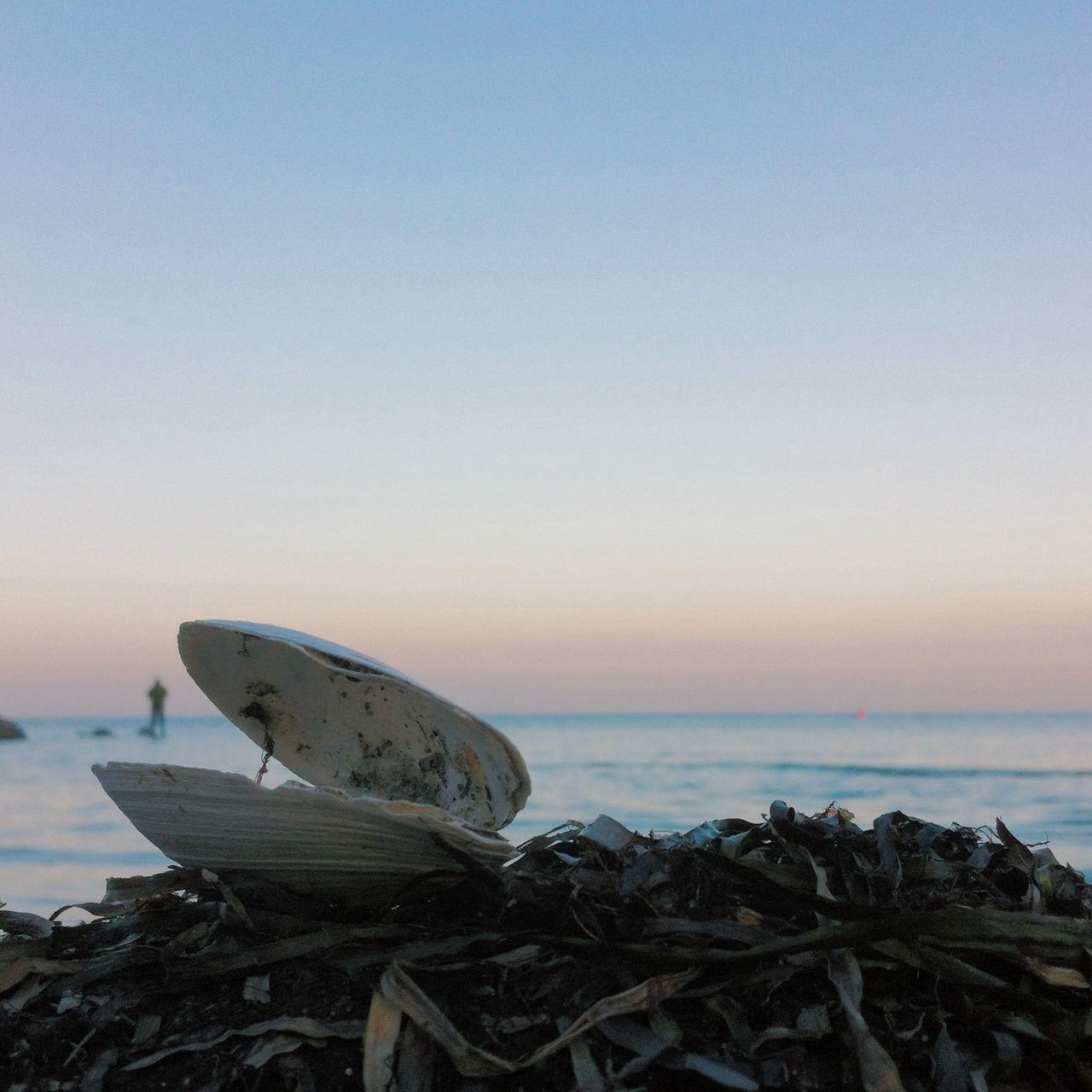 Sea shell Ocean Landscape Sunset Nature