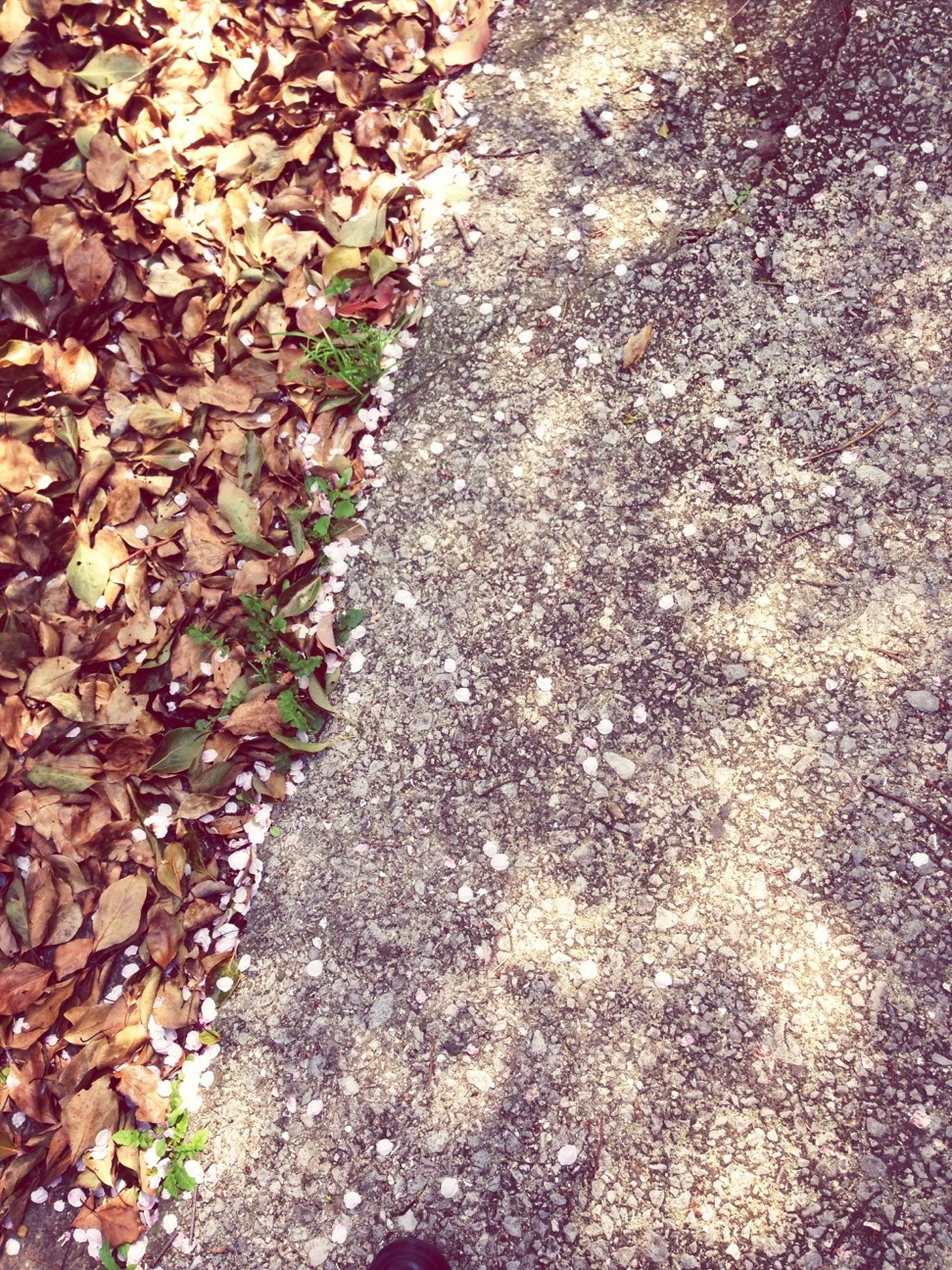 textured, high angle view, rough, asphalt, street, nature, outdoors, day, road, full frame, no people, backgrounds, sunlight, growth, close-up, stone - object, rock - object, leaf, footpath, moss