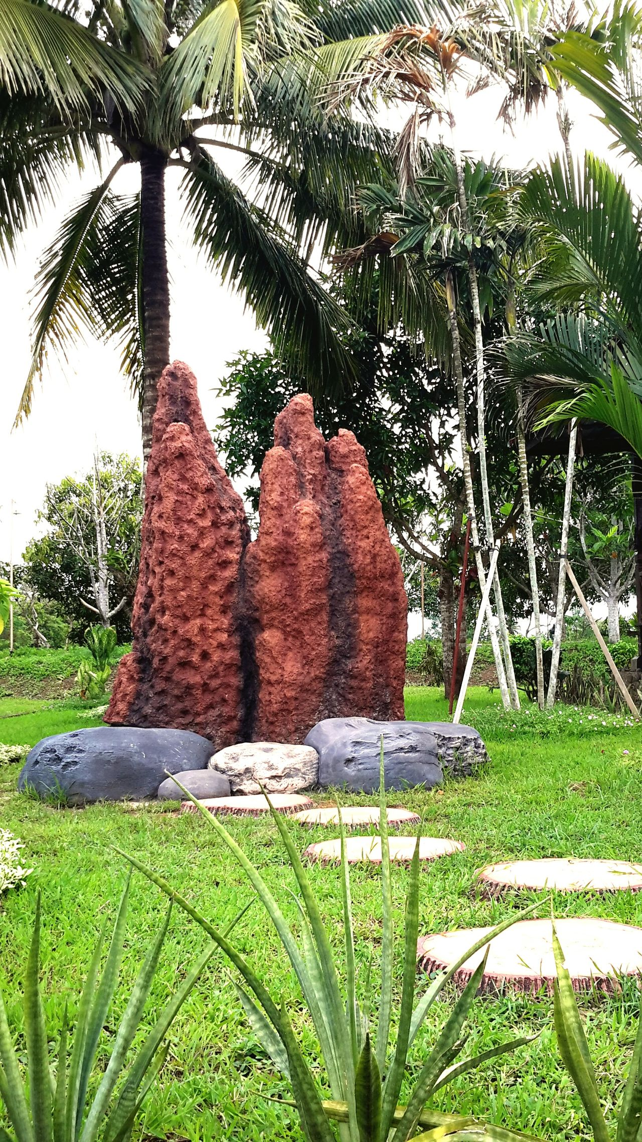 sarang semut papua.. Sarang Semut Merauke Papua INDONESIA Showcase March Hello World Exterior Design Beautiful Nature