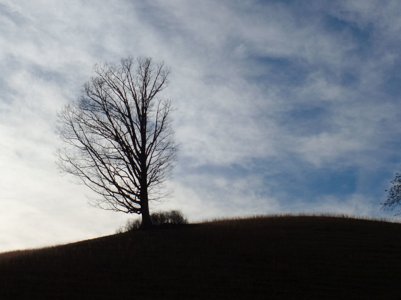 Bare Tree Tree Cloud - Sky Sky Nature Silhouette No People Branch Outdoors Day Single Tree Tranquil Scene Nature Beauty In Nature