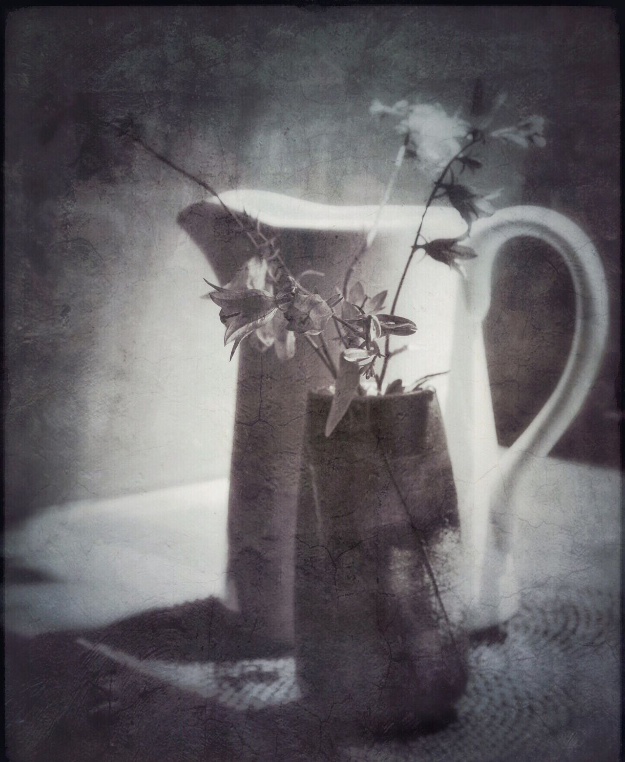 Achromatic Monochrome Greyscale Blackandwhite Light And Shadow Still Life Vintage Flowers Floral Melancholic Landscapes Moody Shadows