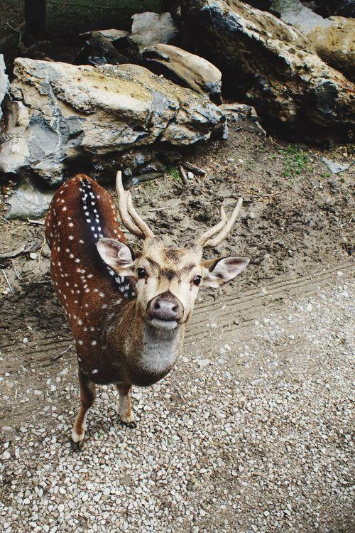 African Deer African Deer Farm