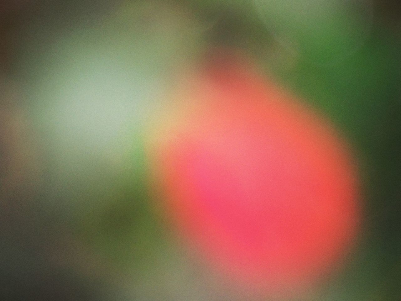 multi colored, nature, no people, beauty in nature, outdoors, day, growth, close-up, defocused, fragility
