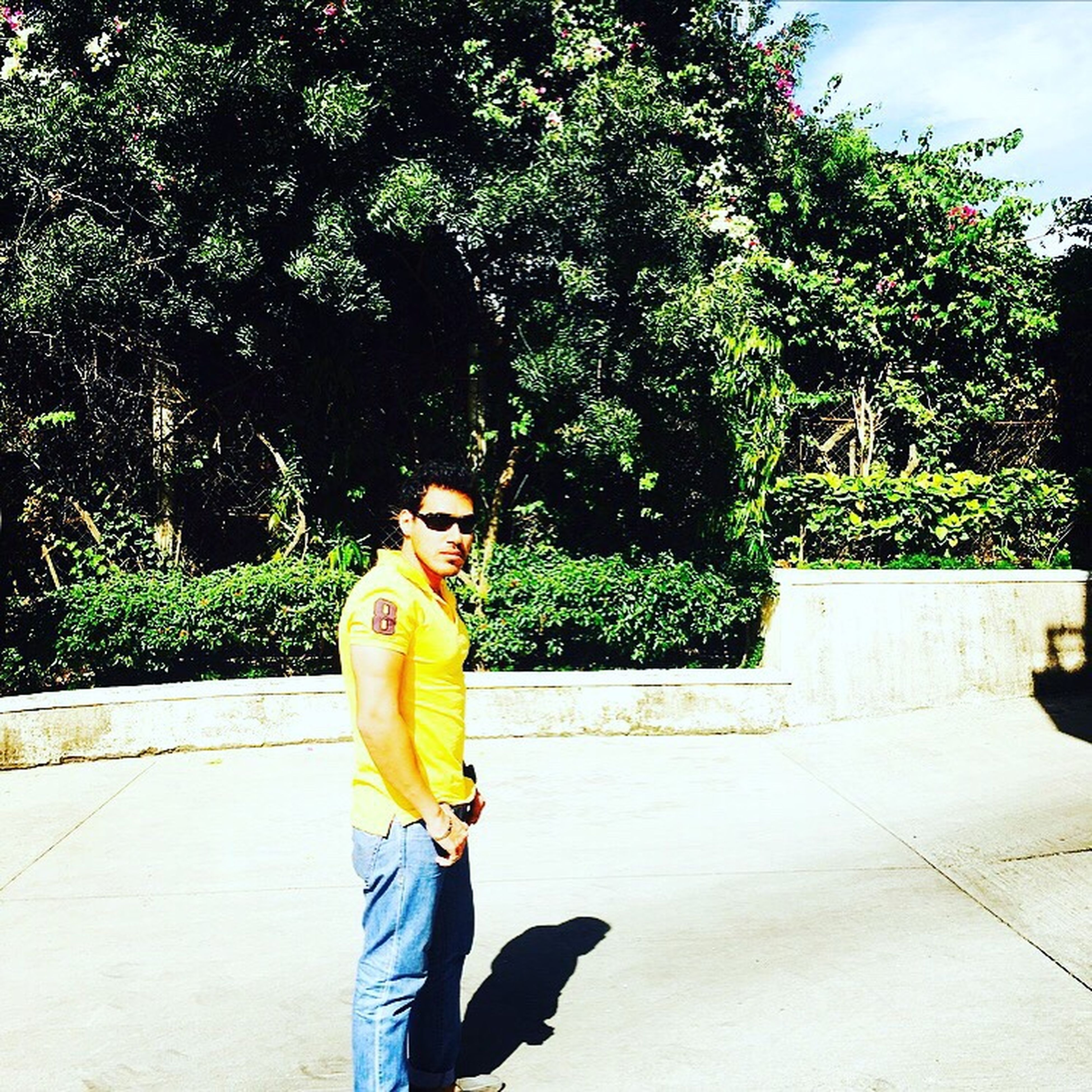 tree, one person, yellow, outdoors, standing, sunglasses, leisure activity, lifestyles, real people, day, young adult, nature