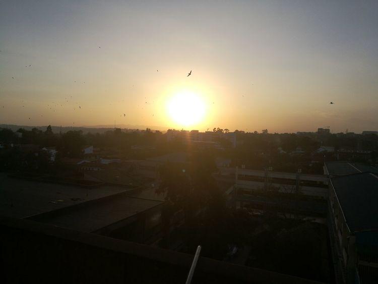 EyeEmNewHere Eyeemphotography Sunset Sun Flying Sky Bird Silhouette Sunlight