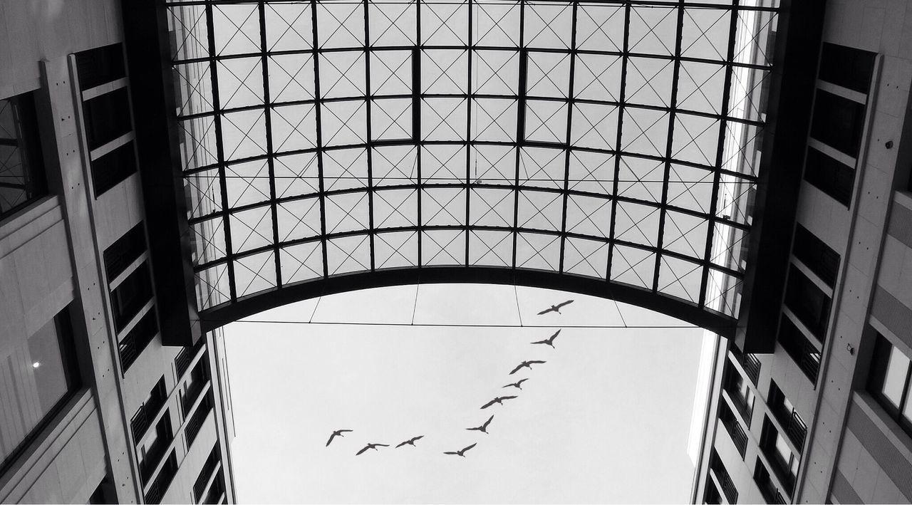 Lp12 Monochrome Lookingup Birds Urban Geometry
