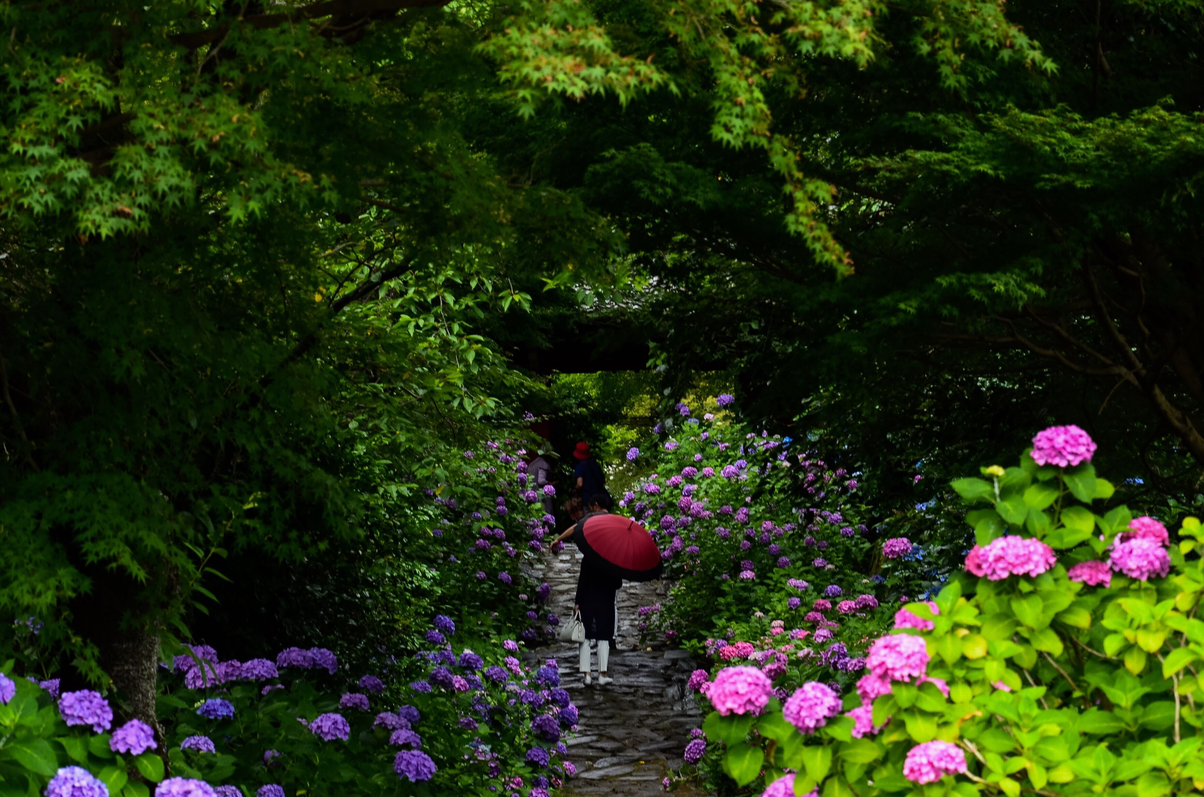 flower, growth, plant, beauty in nature, freshness, green color, nature, tree, fragility, pink color, park - man made space, leisure activity, purple, lifestyles, blooming, tranquility, petal, high angle view