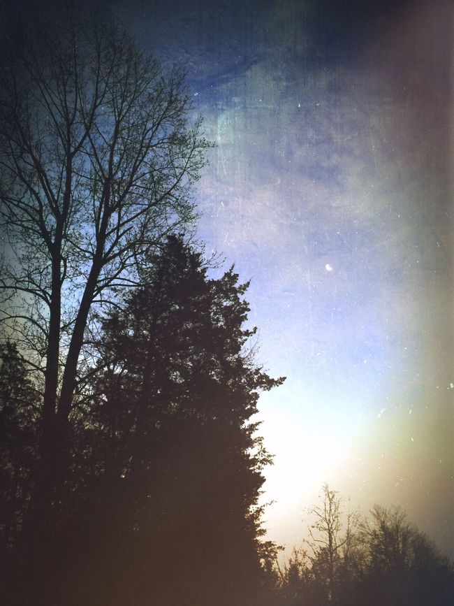 Dawn Sky_collection Trees And Sky Landscape_Collection Rural Scenes Mood Digital Art In The Forest